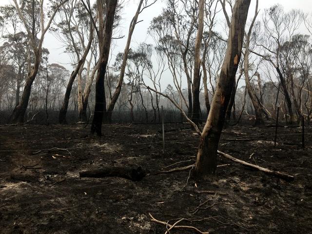Australian Citizen Science Association statement on 2019/20 bushfires