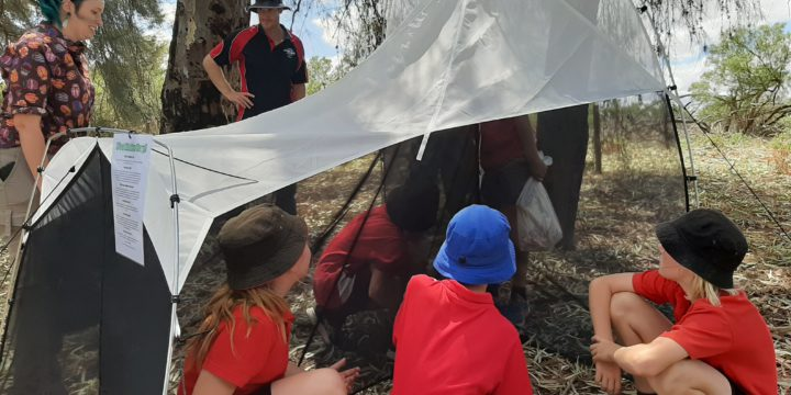 Insect Investigators – a school-based citizen science project discovering and documenting our biodiversity